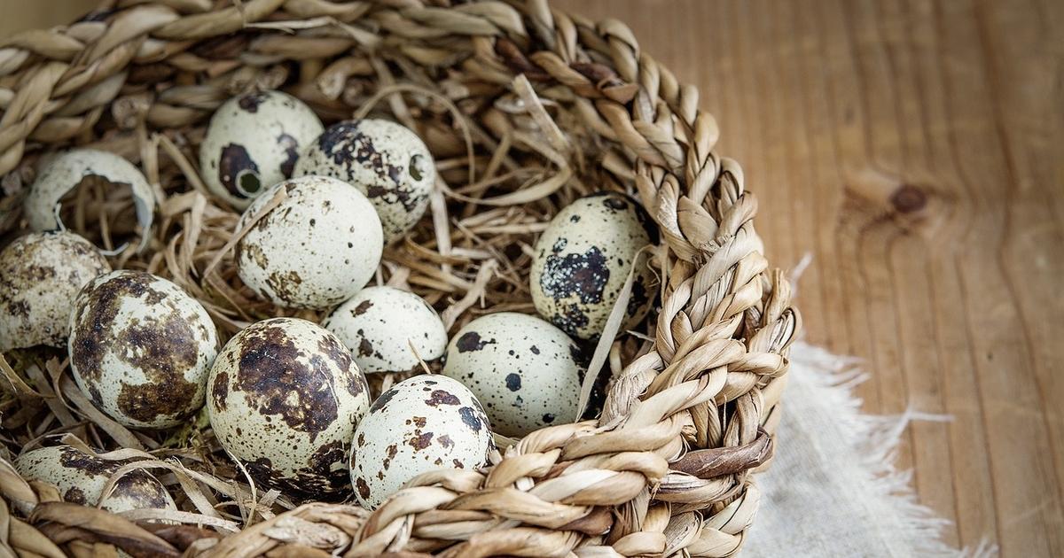 чем полезны яйца